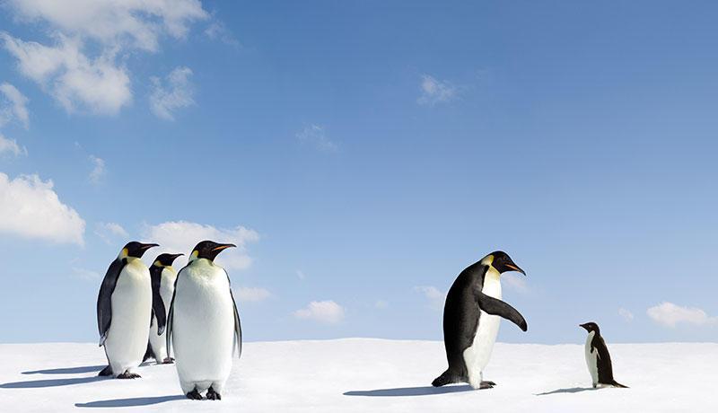 シロクマにもペンギンにもコーチが必要